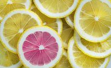Free Sliced Of Citrus Lemons Stock Images - 115844334