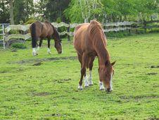 Free Horse, Pasture, Grazing, Grass Stock Photo - 115876340