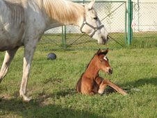 Free Horse, Pasture, Ecosystem, Horse Like Mammal Royalty Free Stock Images - 115876359