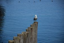 Free Bird, Sea, Water, Sky Stock Photos - 115876453