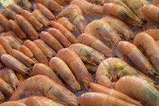 Free Shrimp, Seafood, Dendrobranchiata, Caridean Shrimp Stock Images - 115876924