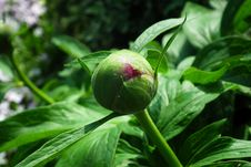 Free Plant, Flower, Bud, Leaf Royalty Free Stock Photo - 115877075
