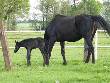 Free Horse, Mare, Pasture, Horse Like Mammal Stock Image - 115877081