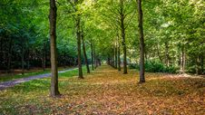 Free Woodland, Nature, Ecosystem, Nature Reserve Royalty Free Stock Image - 115877476