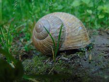 Free Snail, Snails And Slugs, Molluscs, Terrestrial Animal Stock Photo - 115877530