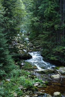 Free Water, Stream, Nature, Vegetation Royalty Free Stock Photo - 115877655