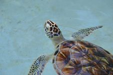 Free Sea Turtle, Turtle, Emydidae, Fauna Royalty Free Stock Photography - 115877917