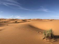Free Green Grasses On Sahara Desert Royalty Free Stock Image - 115913576