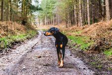 Free Dog, Dogwalk, Forest Stock Photo - 115913780