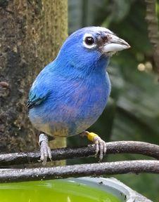 Free Blue Bird Perched On Black Metal Rod Royalty Free Stock Photos - 115913898