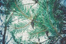 Evergreen Tree Under Snow Retro Stock Photo