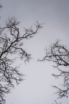 Free Leafless Branches Of Park Winter Trees Stock Photo - 115952150