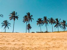 Free Coconut Trees On Brown Sand Stock Image - 115976821