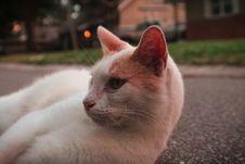 Free White And Orange Cat Lying On Pavement Royalty Free Stock Photos - 115976858