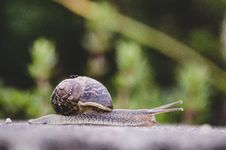 Free Selective Focus Photography Of Snail Royalty Free Stock Image - 115976896