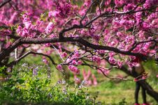 Free Closeup Photo Of Pink Petaled Flower Tree Stock Images - 115976934