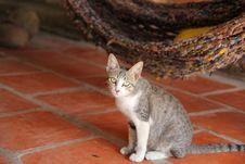 Free Gray Tabby Cat Royalty Free Stock Photo - 115977015