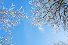 Free Low Angle Photo Of Leafless Trees With Snows Under Clear Blue Sky Stock Photo - 115977030