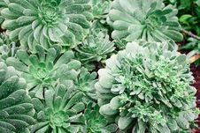 Free Green Leafed Plants Royalty Free Stock Photo - 115977065