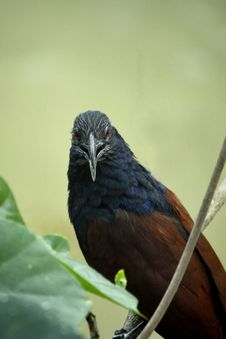 Free Closeup Photo Of Black, Blue, And Brown Bird On Tree Branch Royalty Free Stock Image - 115977086