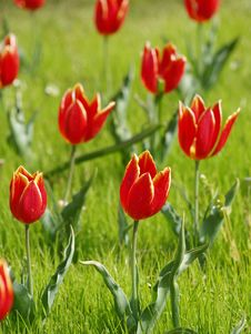 Free Selective Focus Photography Of Red Petaled Flowers Stock Photos - 115977193