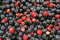 Free Blueberry And Wild Strawberry Stock Photography - 1165612