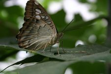 Free Butterfly Stock Photo - 1160090
