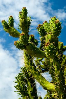 Free Beautiful Cactus Stock Images - 1160134