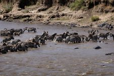 Crossing The Mara River Royalty Free Stock Photos