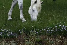 Free Horse Grazing Royalty Free Stock Image - 1160946