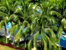 Free Tropical Palm And Swimming Pool Stock Photos - 1161013