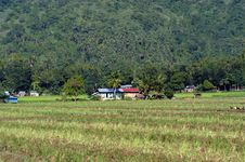 Little Houses On The Rice Field Royalty Free Stock Images