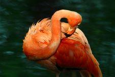 Free Flamingo Stock Photos - 1162823