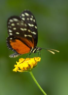 Free Butterfly Royalty Free Stock Photography - 1164397