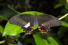 Free Butterfly Stock Images - 1164404