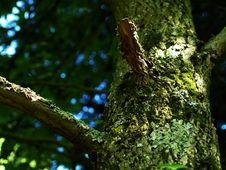 Free Tree Royalty Free Stock Image - 1165736