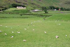 Irish Sheep Farm Stock Photography