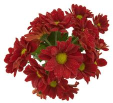 Free Bunch Of Dark Red Chrysantemums Royalty Free Stock Image - 1167666