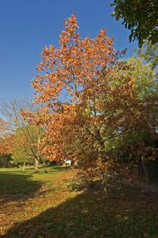 Free Autumn In The Park Royalty Free Stock Photo - 1169775