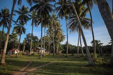 Free Photography Of Palm Trees Near Houses Stock Images - 116049734