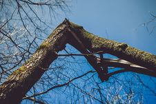 Free Photography Of Broken Bough Royalty Free Stock Photography - 116049767