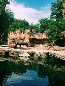 Free Photography Of Rhinoceros Near Body Of Water Stock Images - 116049804
