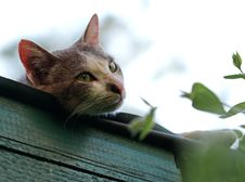 Free Shallow Focus Photography Of Short-coated Gray And White Cat Stock Photos - 116049843