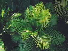 Free Photography Of Plants Royalty Free Stock Image - 116049846