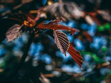 Free Close-Up Photography Of Leaves Royalty Free Stock Photography - 116049887