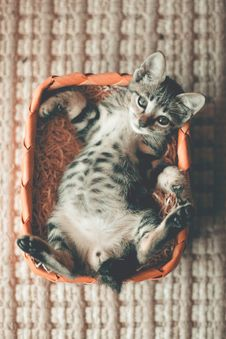Free Photo Of Tabby Kitten Lying On Orange Basket Stock Photography - 116049902