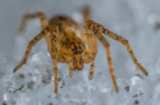 Free Close-up Photo Of Brown And Black Lynx Spider Stock Images - 116050144