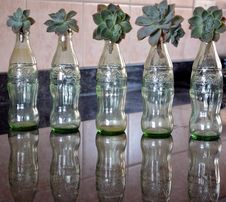 Free Bottle, Glass, Glass Bottle, Flowerpot Royalty Free Stock Photography - 116069027