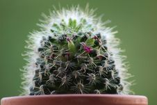 Free Plant, Cactus, Thorns Spines And Prickles, Flowering Plant Stock Photo - 116069050
