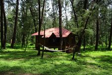 Free Nature Reserve, Forest, Tree, Hut Stock Photos - 116069103